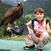 Birds of prey festival